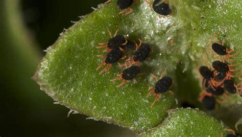 resistant pest warning  crops  examiner