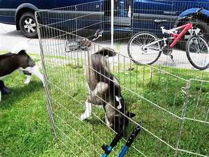 comfortable electric dog fence wire pictures inspiration With non electric dog fence