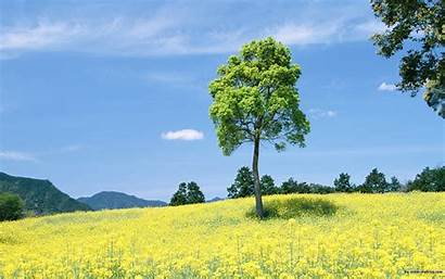 Outdoor Nature Wallpapers Desktop Outside Background Relaxing
