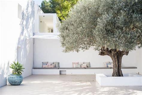 Olivenbaum Im Haus by Der Olivenbaum Garten Minimalistischer Garten