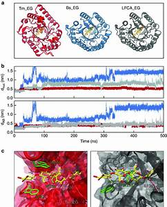 Computational Analysis Of Enzyme