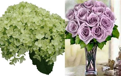 17 Best Images About Purple Green And White Flowers On
