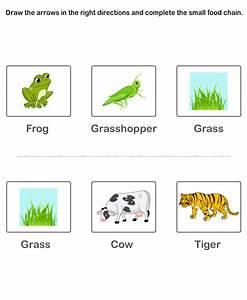 Food Chain Worksheets Kids   Preschool Worksheets