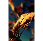 Autumn Leaf Macro Android Wallpaper Free Download