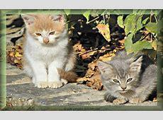 Bild von Katzen zwei kleine Katzen draußen im