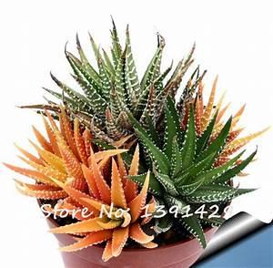 Aloe Vera Essbar : online kaufen gro handel haworthia anlage aus china haworthia anlage gro h ndler ~ Buech-reservation.com Haus und Dekorationen