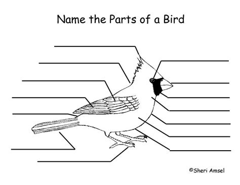 students can color and label the parts of a bird to learn about beaks wings and claws