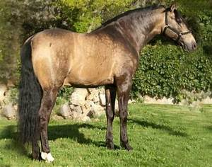 4090 best images about Horses. on Pinterest | Horses for ...