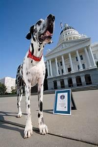 2004: Tallest Dog | Guinness World Records