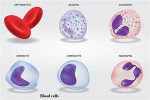 14 Types Of Cells In Human Body  U0026 Their Important Functions