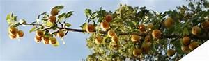 Conservation Des Poires : un fruit de saison la poire ~ Melissatoandfro.com Idées de Décoration
