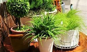 Marc De Café Plantes D Intérieur : 5 conseils utiles pour des plantes d 39 int rieur en bonne sant trucs pratiques ~ Melissatoandfro.com Idées de Décoration