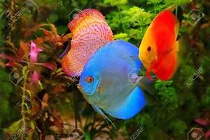 Poisson Aquarium Eau Chaude : aquarium eau douce poisson poisson naturel ~ Mglfilm.com Idées de Décoration