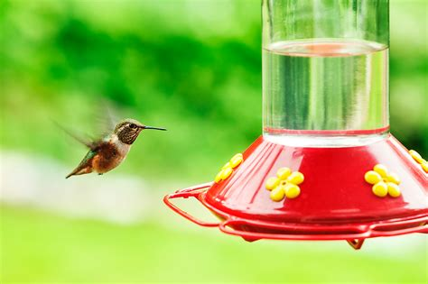 3 tips for placing your hummingbird feeder