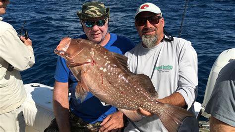 grouper offshore gulf tango mexico always