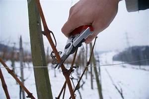 Reben Richtig Schneiden : kalt beim reben schneiden winzerblog ~ Lizthompson.info Haus und Dekorationen
