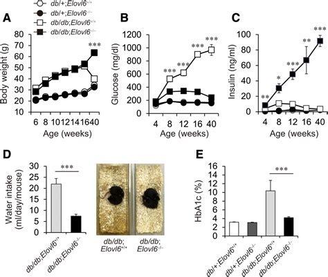 elovl deficiency improves glycemic control  diabetic db