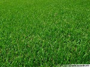 Gazon Pour L Ombre : une belle pelouse ~ Premium-room.com Idées de Décoration