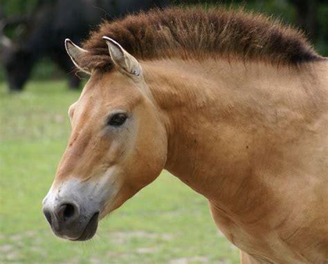 horse haircut nice pretty