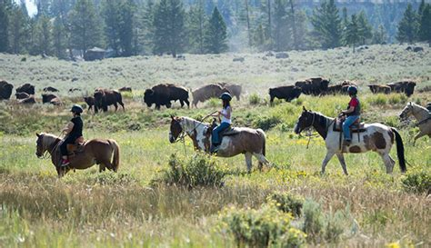horseback yellowstone riding horse ride park national things western activities activity mountains summer kid region adventures ys rocky yellowstonepark