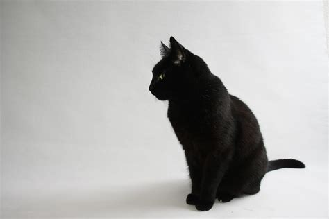 black cat superstition cats hd wallpapers hd wallpapers