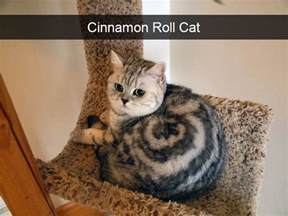 cats pictures 10 hilarious cat snapchats that are im paw sible not to