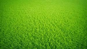 Green Grass Background by SoulArt2012 on DeviantArt