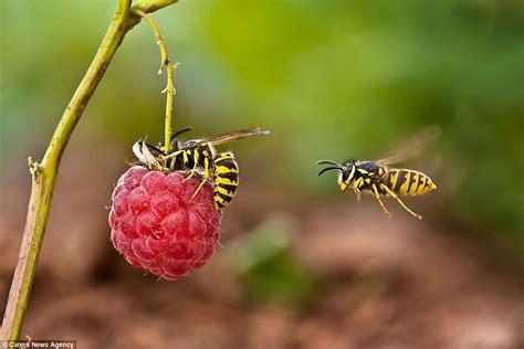 rehabilitating  wasp theyre  friendly