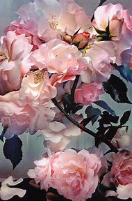 Nick Knight Roses