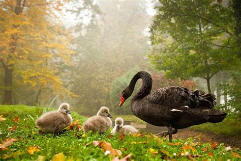 Wallpapers For You 25 Most Beautiful Animals Birds