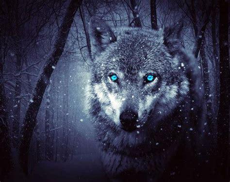 blue eyes white wolf  diamond painting kits oloee