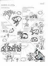 Biology Coloring Pages Cell Human Printable Getcolorings sketch template