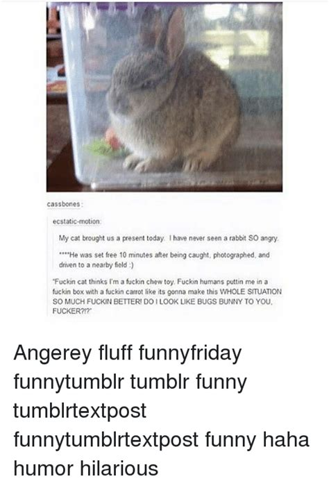 Angry Bunny Meme - 25 best memes about angerey angerey memes