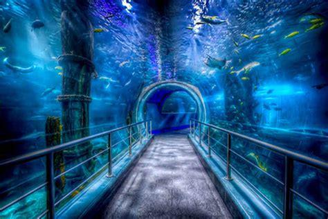 Melbourne Aquarium Hidden City Secrets