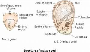 Maize  U0026 Bean  04  20  12