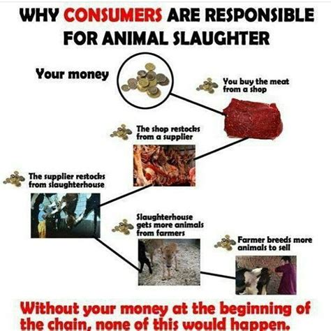 images  animal rights campaign vegan cx