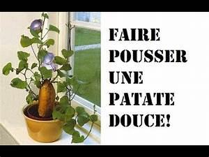 Patate Douce Plante : faire pousser une patate douce youtube ~ Dode.kayakingforconservation.com Idées de Décoration
