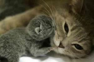 Baby kitten - Teh Cute