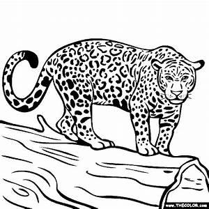 jaguar clipart coloring book pencil and in color jaguar With jaguar s type black