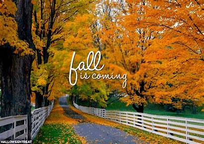 Fall Halloween Coming Autumn October Gifs Leaves