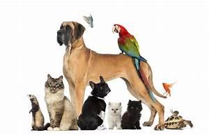 Haustiere Für Kinder : haustiere und der fasching ~ Orissabook.com Haus und Dekorationen