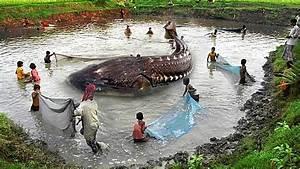 10 Biggest Sea Creatures - YouTube