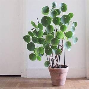 Große Zimmerpflanzen Wenig Licht : lo stile urban jungle come arredare con le piante da interni ~ Markanthonyermac.com Haus und Dekorationen