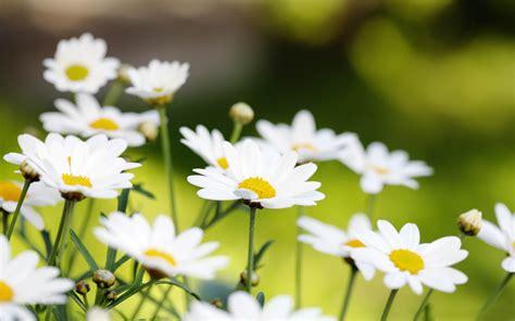 Summer Flower Hd Wallpapers