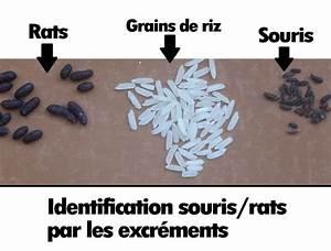 Crottes De Souris : crottes de souris ou de rats quelles diff rences ~ Melissatoandfro.com Idées de Décoration
