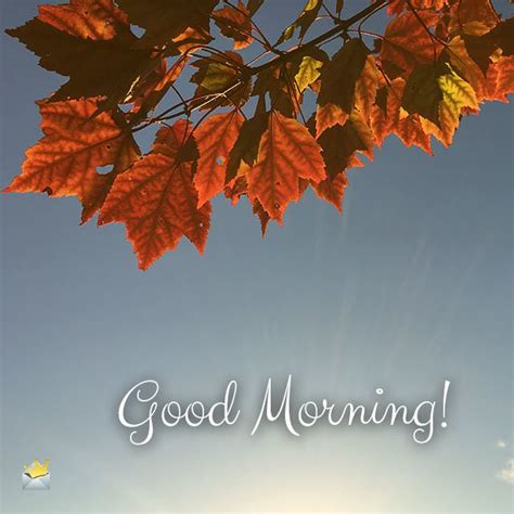 beautiful good morning images  inspire   day