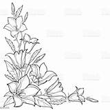 Outline Flower Corner Leaf Vector Bluebell Bouquet Bellflower Bell Campanula Illustration Isolated Drawing Floral Bud Pattern Clipart Drawings Blossom Vectors sketch template