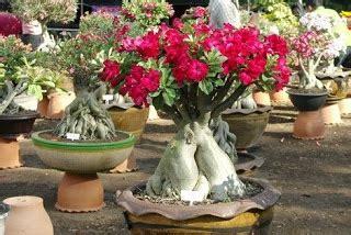 jenis tanaman hias mungkin suka tanaman magz