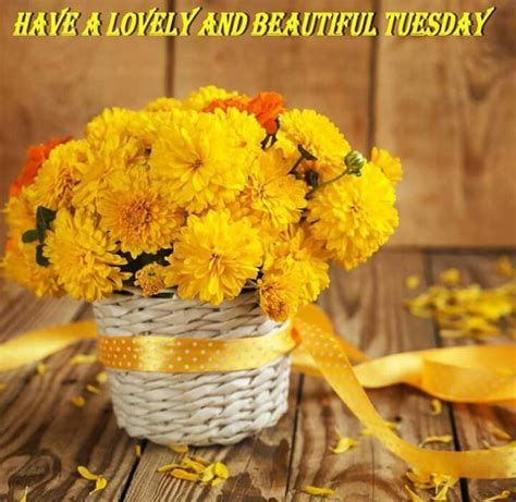 Have A Lovely And Beautiful Tuesday Pictures, Photos, and