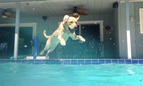 jumping   pool      leader
